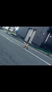 北海道,自転車,チャリダー,聖地, オロロン街道, 地平線,空一面,絶景,道中,代わり映えの無い景色,猫, 一眼レフ, 構図