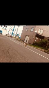 北海道,自転車,チャリダー,聖地, オロロン街道, 地平線,空一面,絶景,道中,代わり映えの無い景色,猫